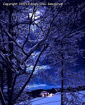 Enchanting Moonlight